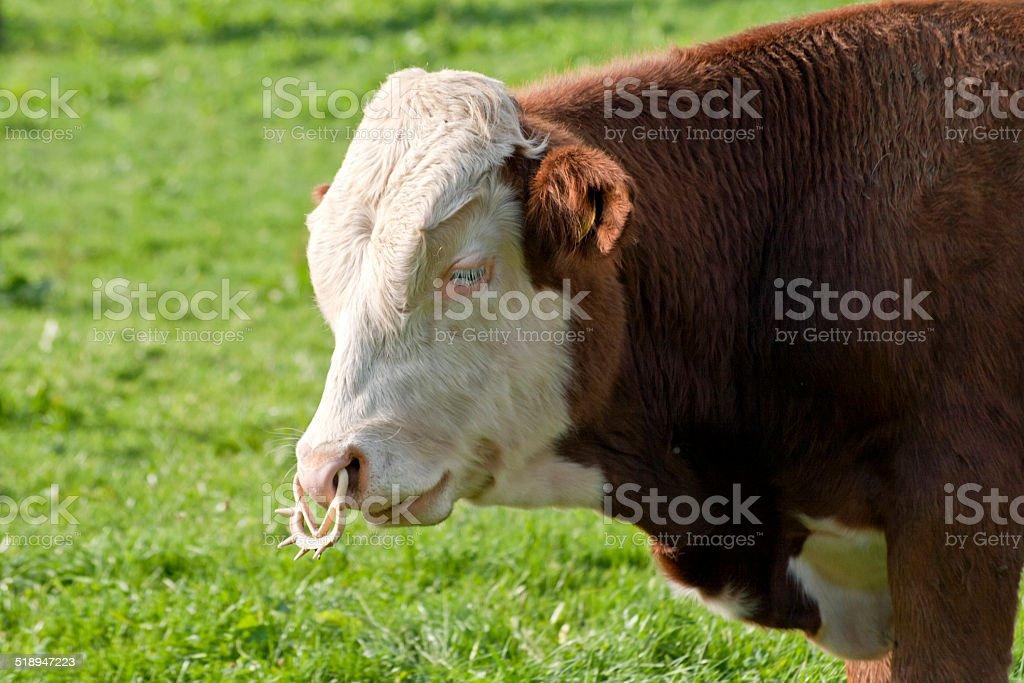 Bulle stock photo