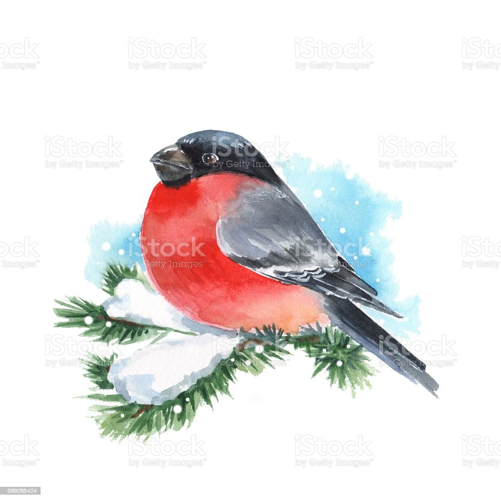Bullfinch and snow. Bird on branch. Watercolor painting stock photo