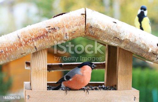 Bullfinch bird  in birdhouse with chickadee on roof.More feeding birds: