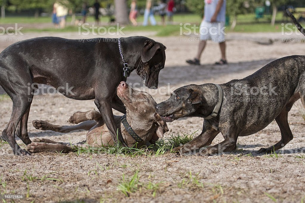 Bullies at the Park stock photo