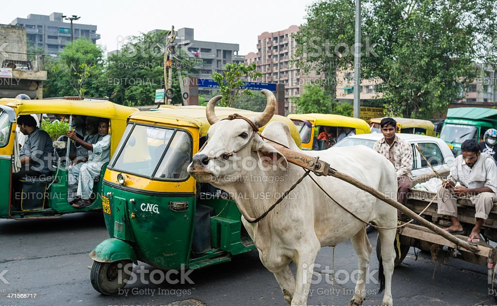 Bullock cart in traffic jam, Delhi, India. stock photo