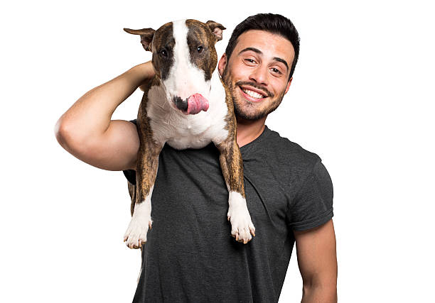 Bull-terrier and his owner stock photo