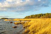 istock Bulrush at the oceanshore in the morning light 538321957