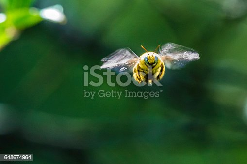 istock Bumble bee from the front 648674964