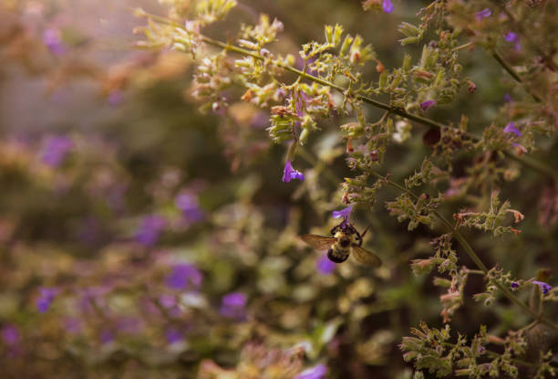 A bumble bee in a flower garden. stock photo