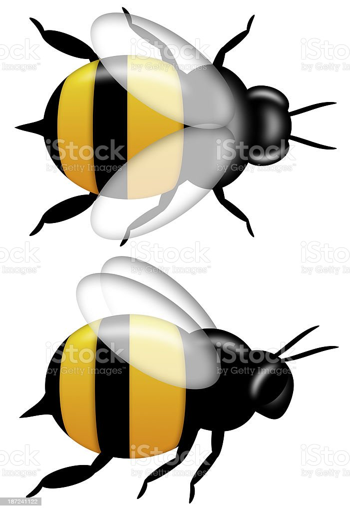 Bumble Bee Top and Side View Isolated on White stock photo
