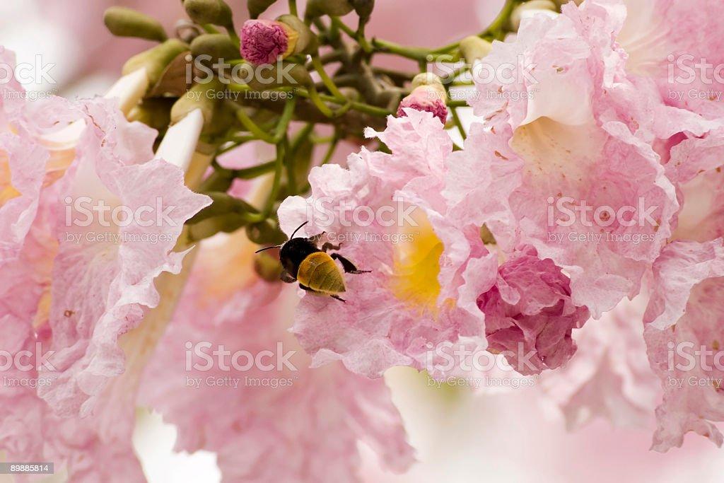 Шмель выходе цветок Стоковые фото Стоковая фотография
