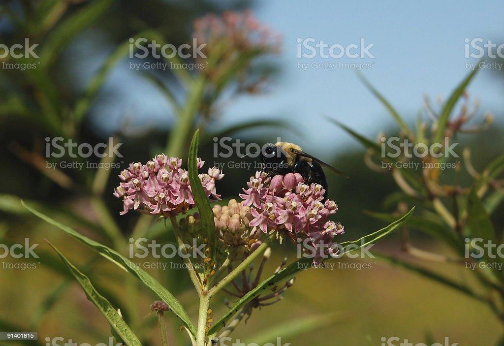 Bourdon sur Fleur - Photo