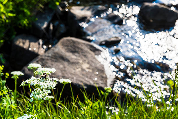 Bumblebee on Flower with Stream Flowing Water stock photo