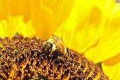istock bumblebee 1344993969