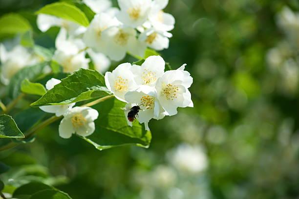 Lustige Bienen Bilder - Bilder und Stockfotos - iStock