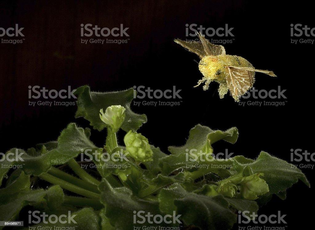 bumblebee royaltyfri bildbanksbilder
