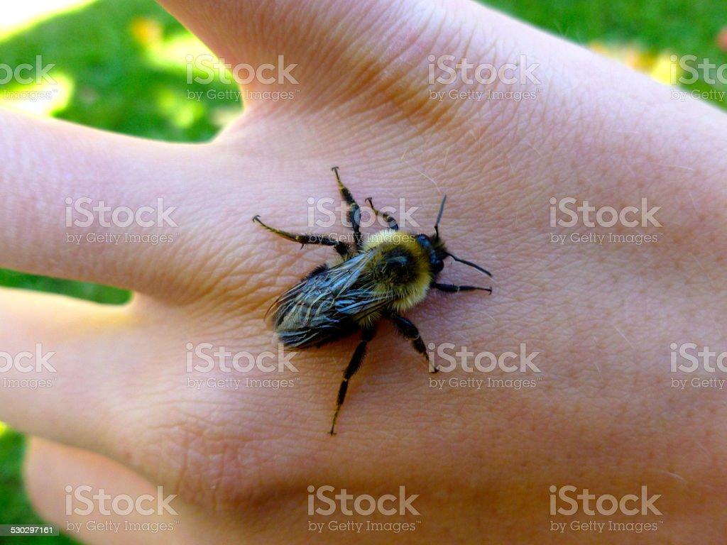 Bumblee Stings Hand – Foto
