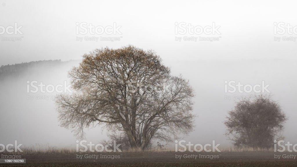 Bäume Im Nebel – Foto