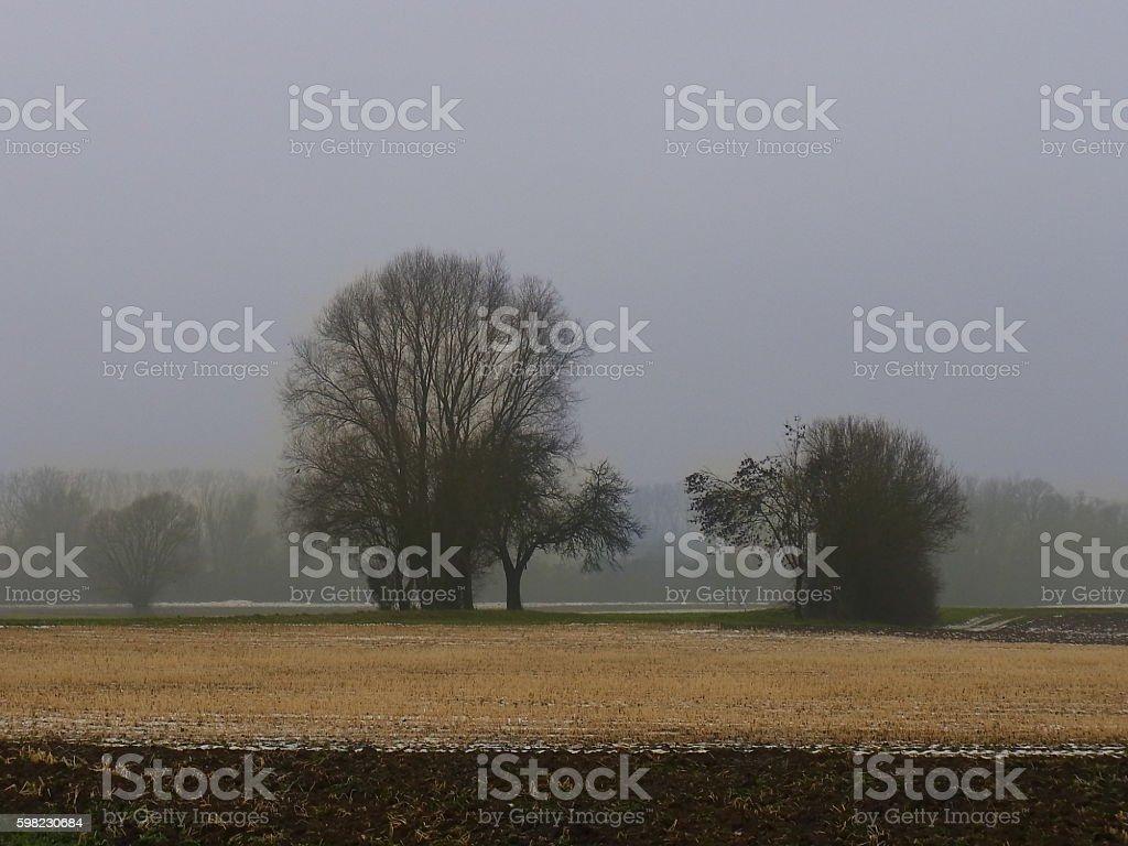 Bäume im Nebel foto royalty-free