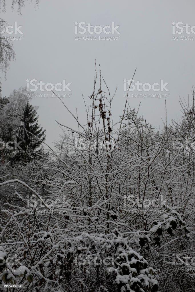 Bäume foto stock royalty-free
