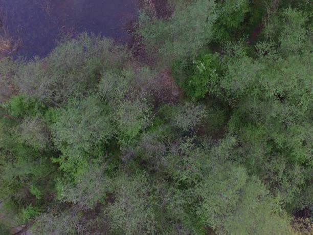 bäume und teich bäume und teich von obene gesehen fluchtpunktperspektive stock pictures, royalty-free photos & images