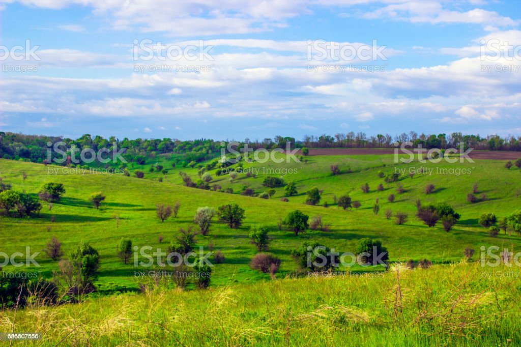 Bumpy Green steppe near with trees and blue sky royalty-free stock photo