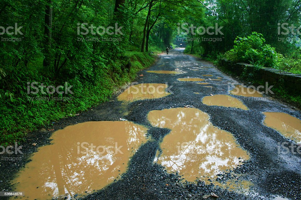 bumpy road in the forest stock photo