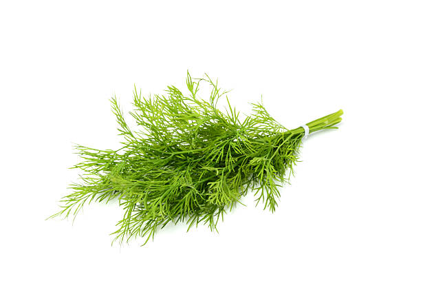 Bunch fresh dill isolated close-up. Bunch fresh dill isolated on white background. dill stock pictures, royalty-free photos & images