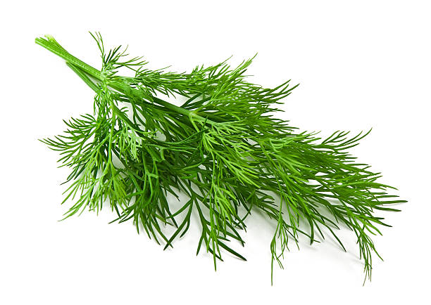 bunch fresh dill bunch fresh dill on white background dill stock pictures, royalty-free photos & images