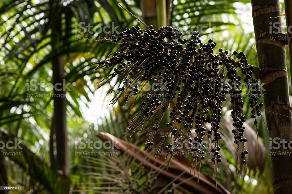 bunch of açai stock photo