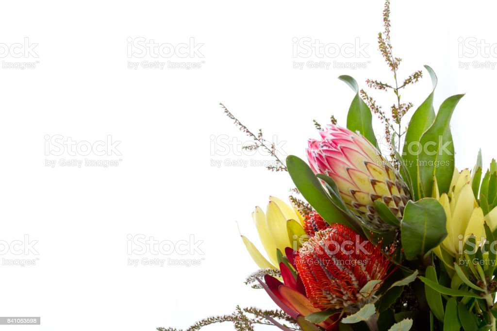 Bunch of Australian Native flowers against white background with copy space stock photo