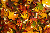 Bunch of autumn fallen leaves creating background pattern