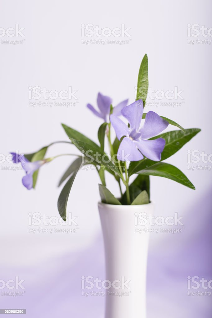 Bunch of beautiful spring flowers royalty-free stock photo