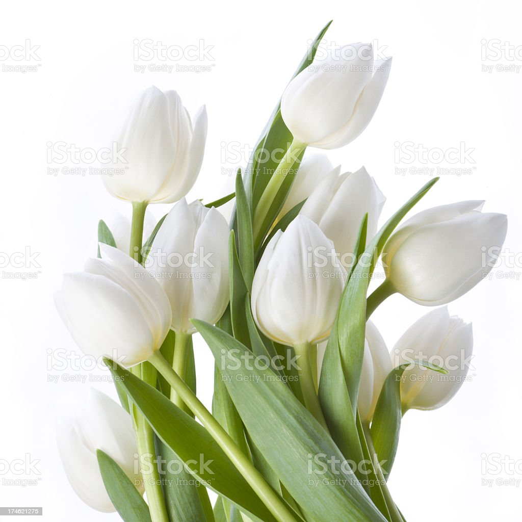 Bunch of beautiful white tulips stock photo