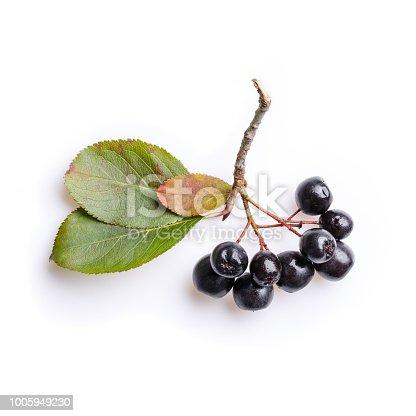 Bunch of black chokeberry berries ( Aronia melanocarpa ) on white.
