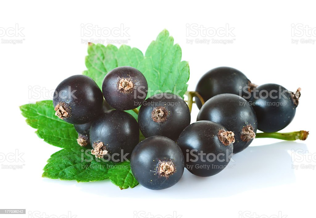 Bunch of black currants with a leaf on a white background stock photo