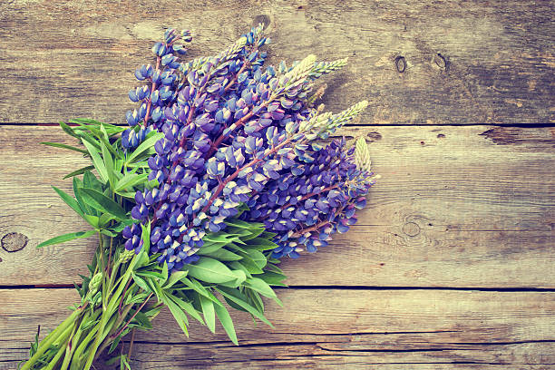 Bunch of blue lupine flowers on wooden background. stock photo