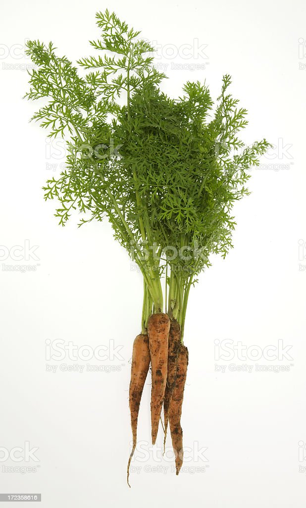 Bunch of carrots royalty-free stock photo