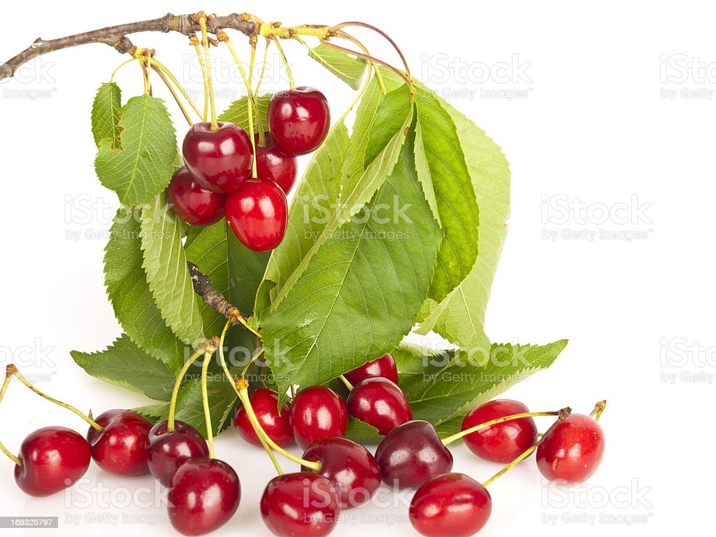 Bunch of cherries royalty-free stock photo