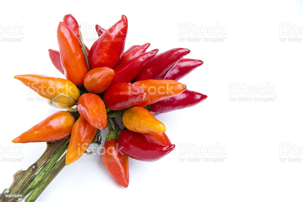 Bunch of chili on stem stock photo