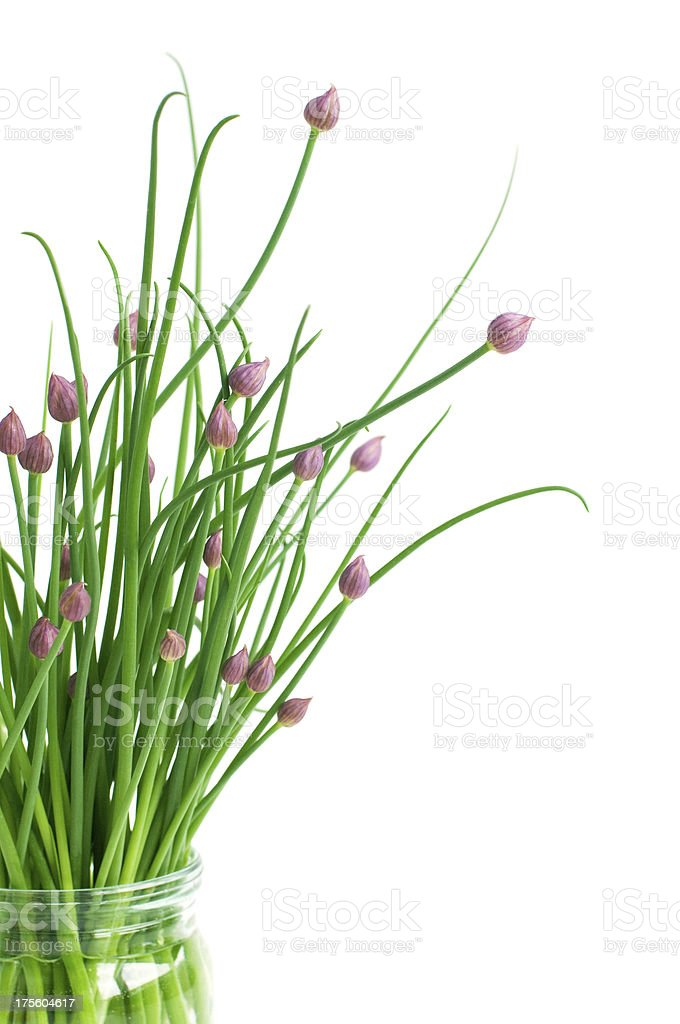 bunch of chive royalty-free stock photo
