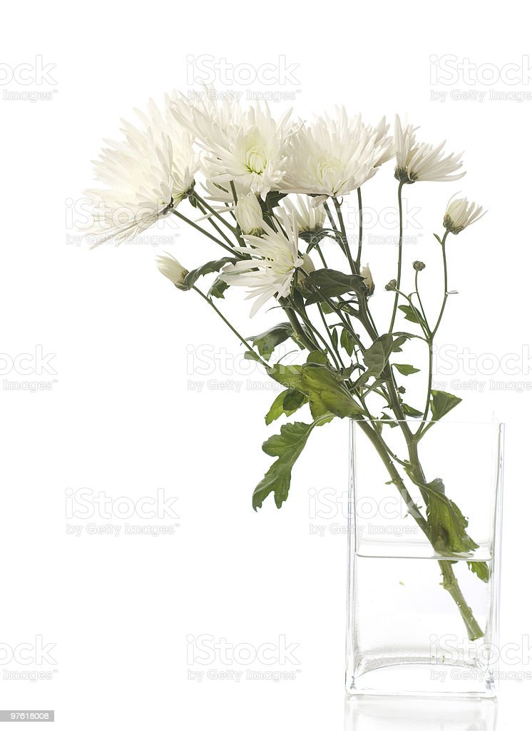 bunch of chrysanthemums royalty-free stock photo