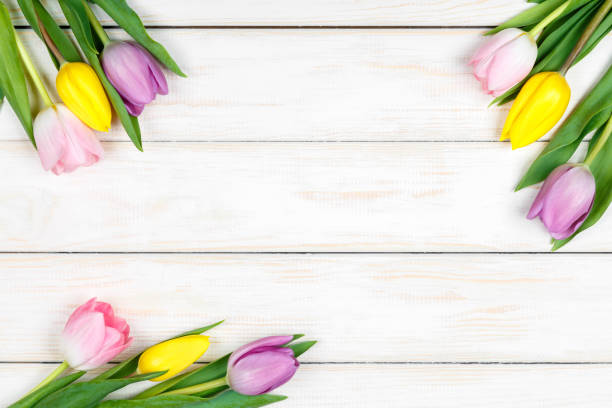Bunch of colored tulips lying on a white wooden background picture id664347838?b=1&k=6&m=664347838&s=612x612&w=0&h=clqyc7t7 z8sla5wnoajcl1msqcjxecn8zbr6df8ejk=