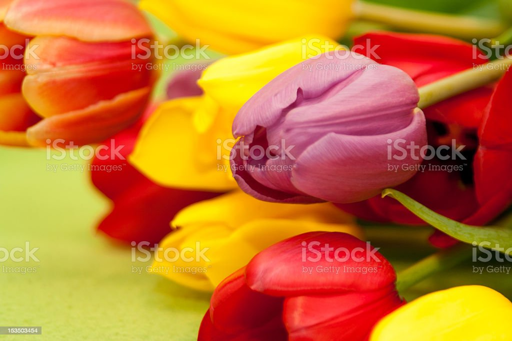 Bunch of colorful tulips royalty-free stock photo