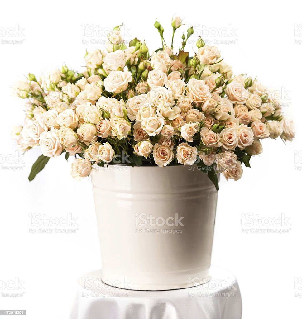 Bunch of creamy roses in a bucket over white stock photo