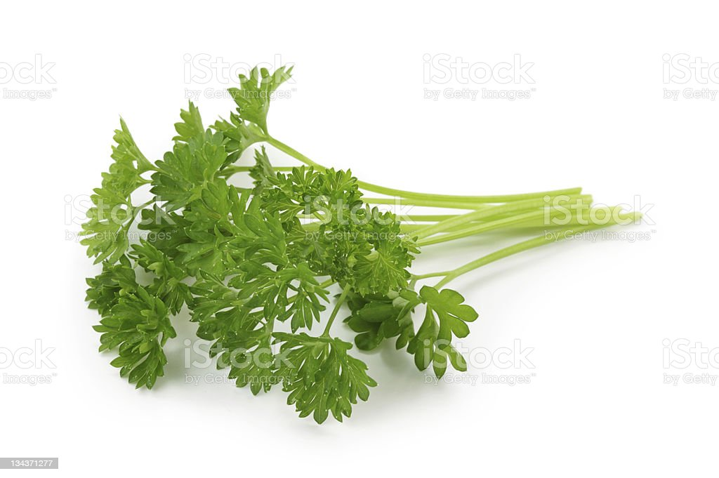 Bunch of curly parsley isolated on white stock photo