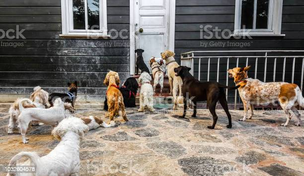 Bunch of cute dogs standing and staring outside of an old wooden door picture id1032604578?b=1&k=6&m=1032604578&s=612x612&h=zcvhifuupoyunmba0iiurcqr6yxzyoiyfwgwoc l ik=