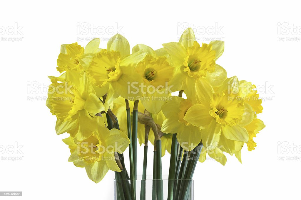 bunch of daffodils royalty-free stock photo