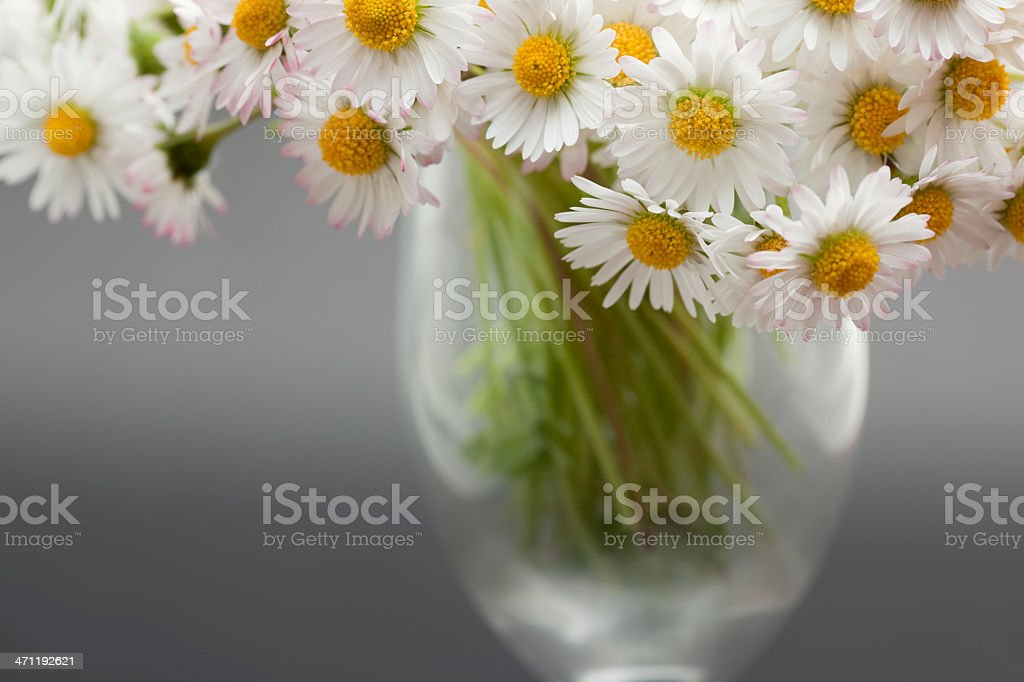 Bunch of daisies in vase on grey background royalty-free stock photo