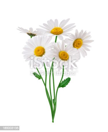 Bunch of golden daisies on white background.