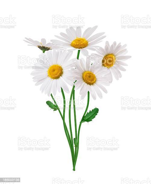Bunch of daisies picture id185003135?b=1&k=6&m=185003135&s=612x612&h=e3miqvhodwkxaulh iaqbcvphfo7nofrt fpaj89za8=