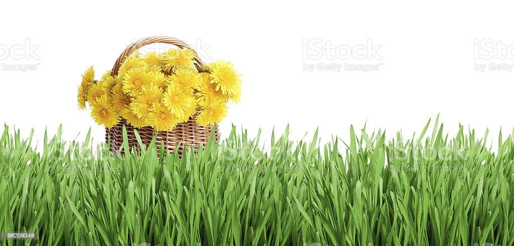 Casco di dandelions e Verde erba foto stock royalty-free