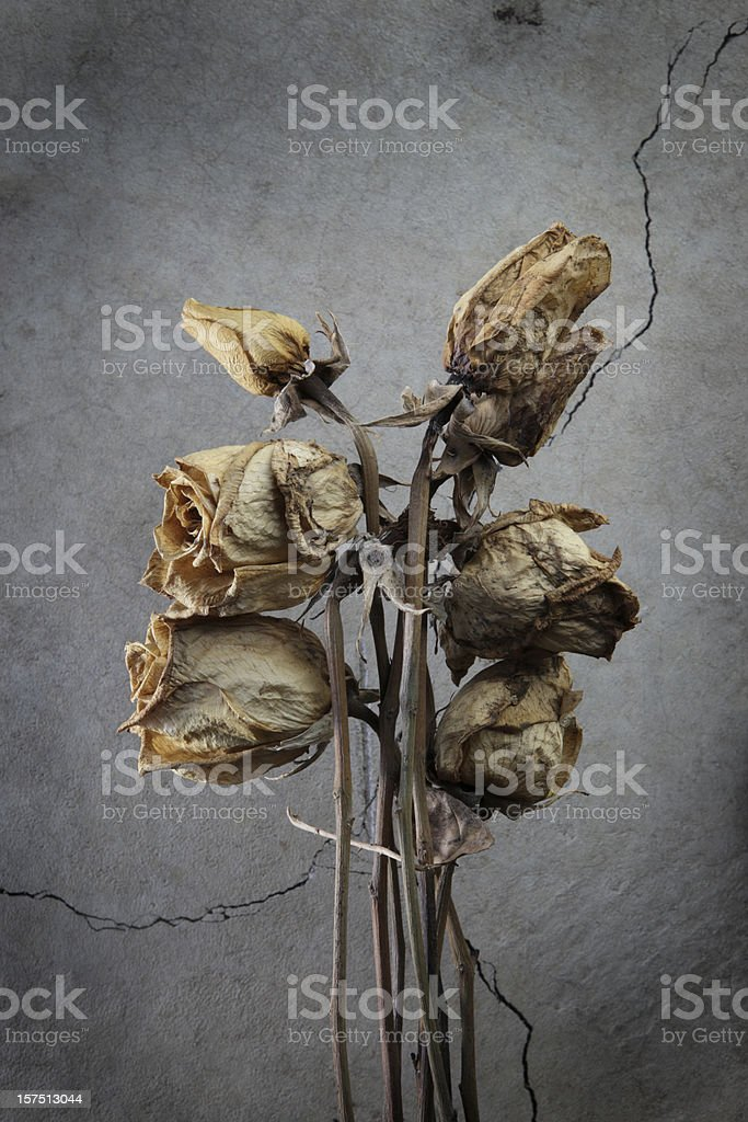 Bunch of dead roses. stock photo