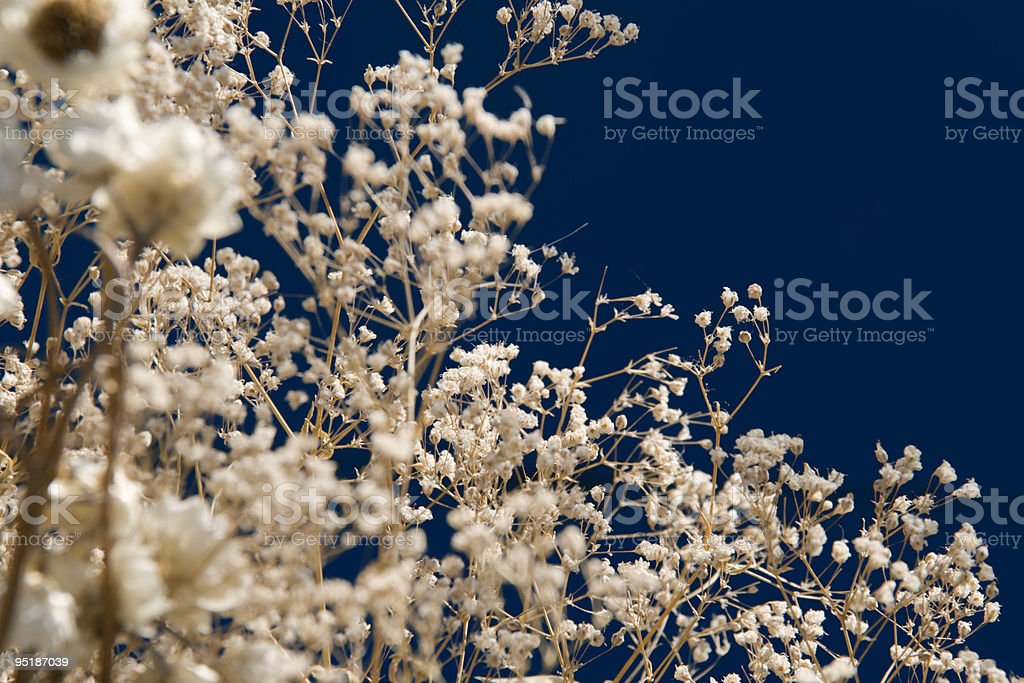 Bunch of delicate dry plants royalty-free stock photo